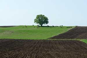 Поле, дерево и лошади. Кахетия. Автор фото: Любен